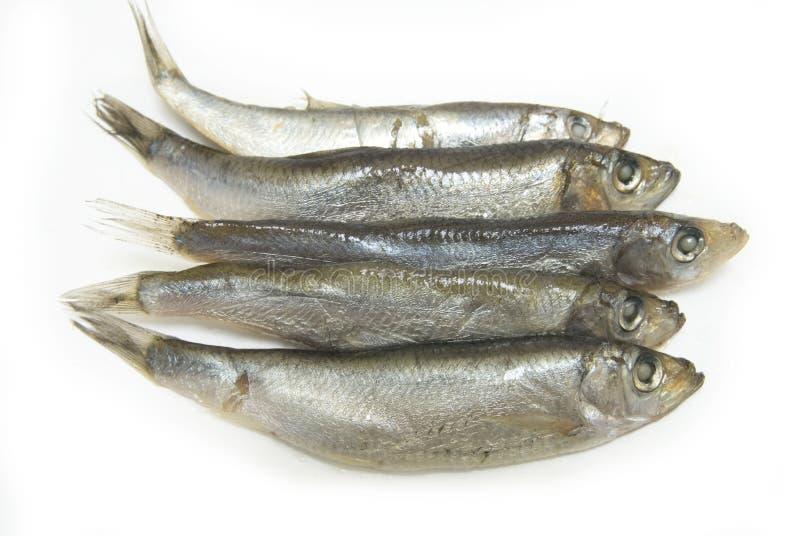 fiskgruppen liten stackare royaltyfria bilder