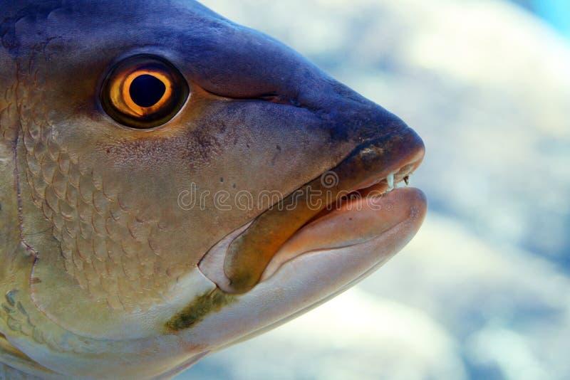fiskhuvud fotografering för bildbyråer