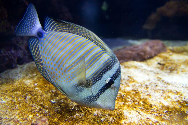 fiskkirurg fotografering för bildbyråer