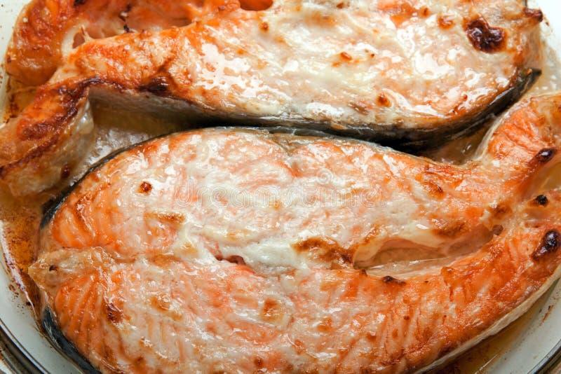 fisklax fotografering för bildbyråer