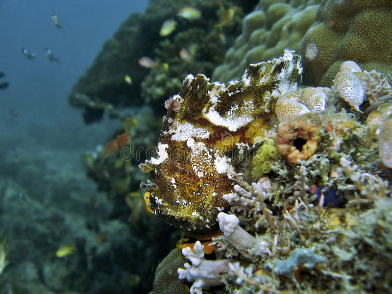 fiskleaf fotografering för bildbyråer