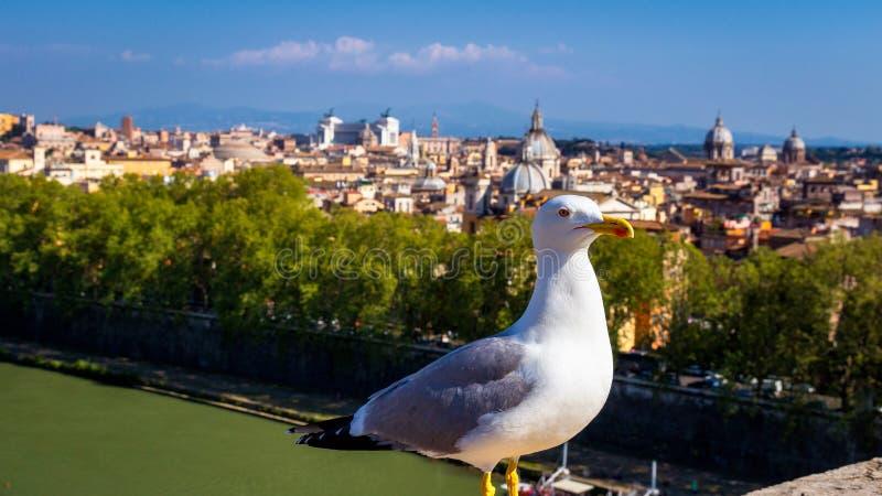 Fiskmås på framtidsutsikten ovanför historisk mitt av Rome Seagullsta arkivbilder