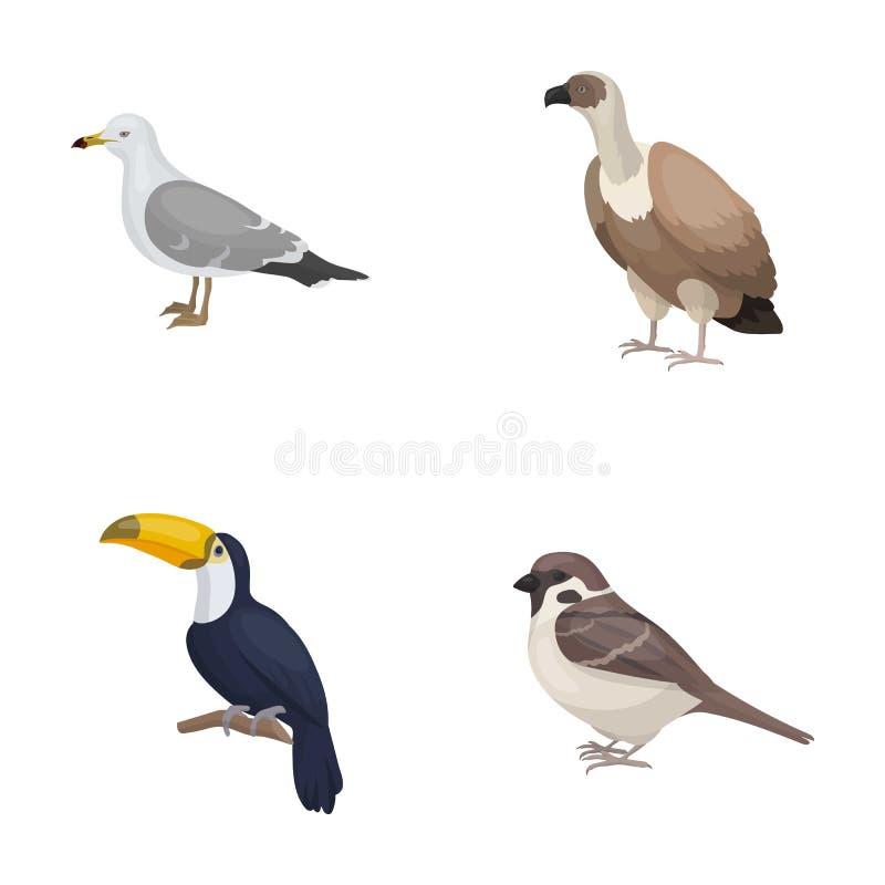 Fiskmås, tukan och annan art Fåglar ställde in samlingssymboler i rengöringsduk för illustration för materiel för symbol för teck stock illustrationer