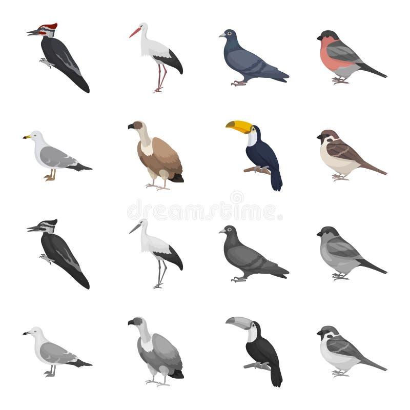 Fiskmås, tukan och annan art Fåglar ställde in samlingssymboler i tecknade filmen, monokrom illustration för materiel för stilvek stock illustrationer