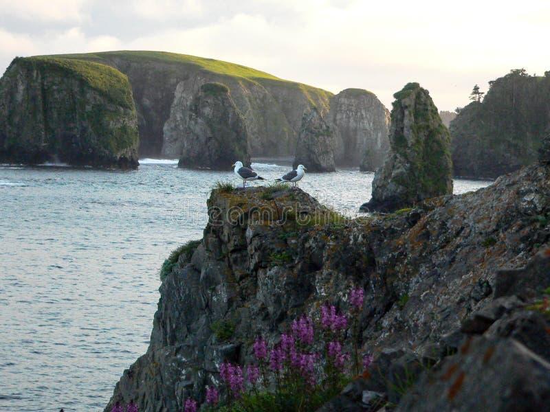 Fiskmåsar på en klippa royaltyfri bild