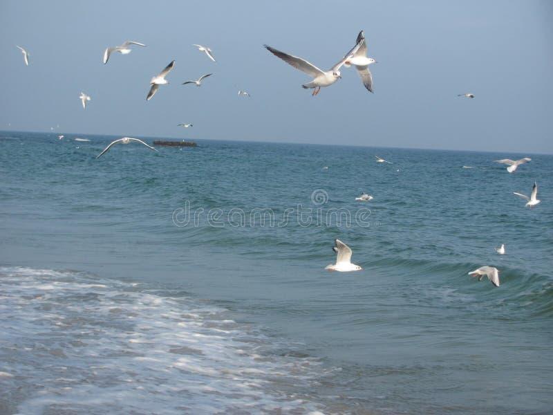 fiskmåsar på sjösidan arkivbild