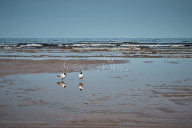 Fiskmåsar på stranden royaltyfri fotografi