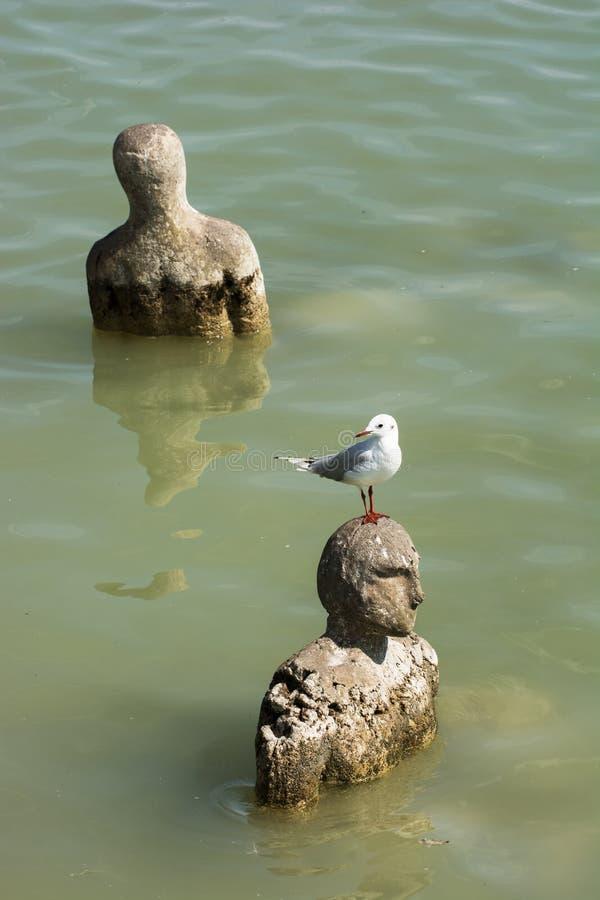 Fiskmåssammanträde på ett huvud av statyn i vatten arkivfoton
