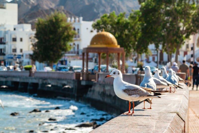 Fiskm?sar p? balustraden av invallningen i Muscat, huvudstaden av Oman royaltyfri fotografi