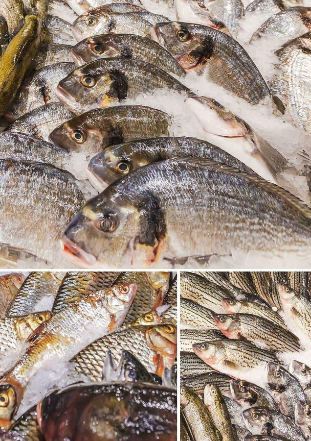 Fiskmat med massor av etiketter i marknaden arkivbilder