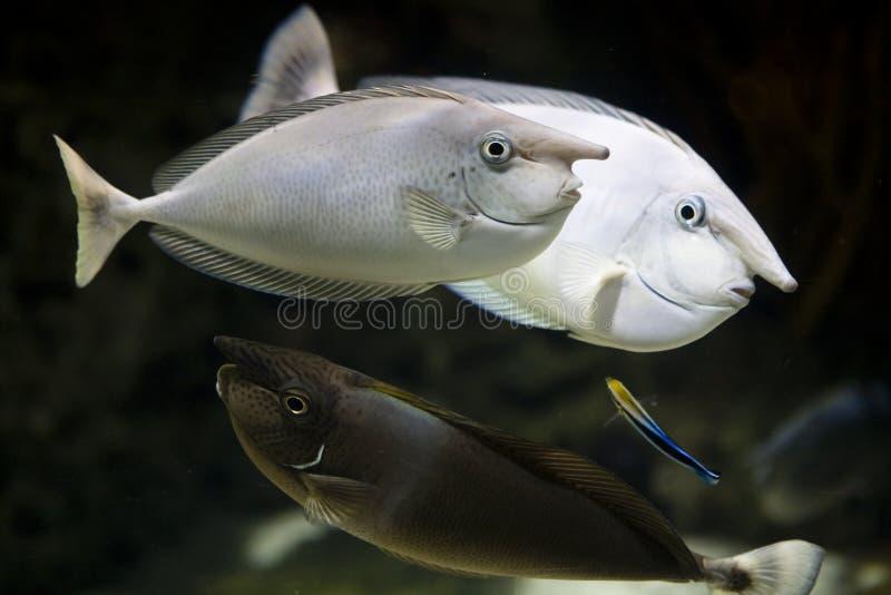 fisknäshav arkivfoto
