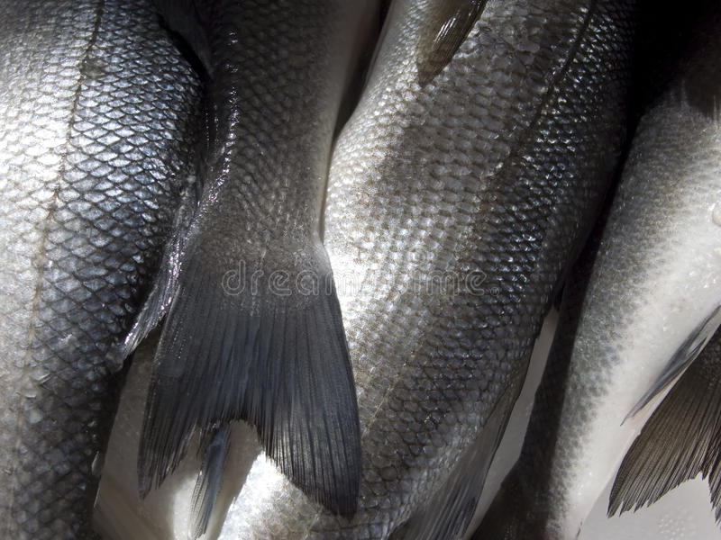 fiskscale royaltyfri fotografi