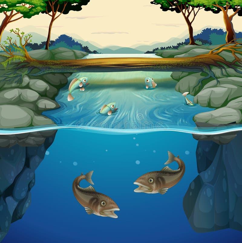 Fisksimning i floden vektor illustrationer