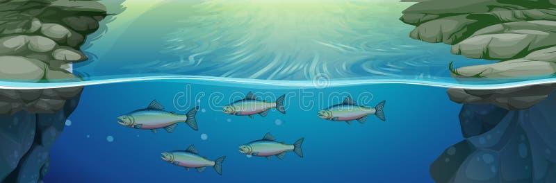 Fisksimning under floden royaltyfri illustrationer