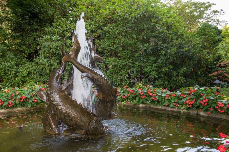 Fiskspringbrunn i japanträdgården, Butchard trädgårdar, Victoria, Kanada royaltyfria foton