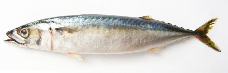 fisktonfisk