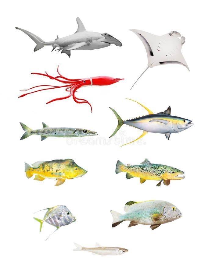 Fiskuppsättning vektor illustrationer