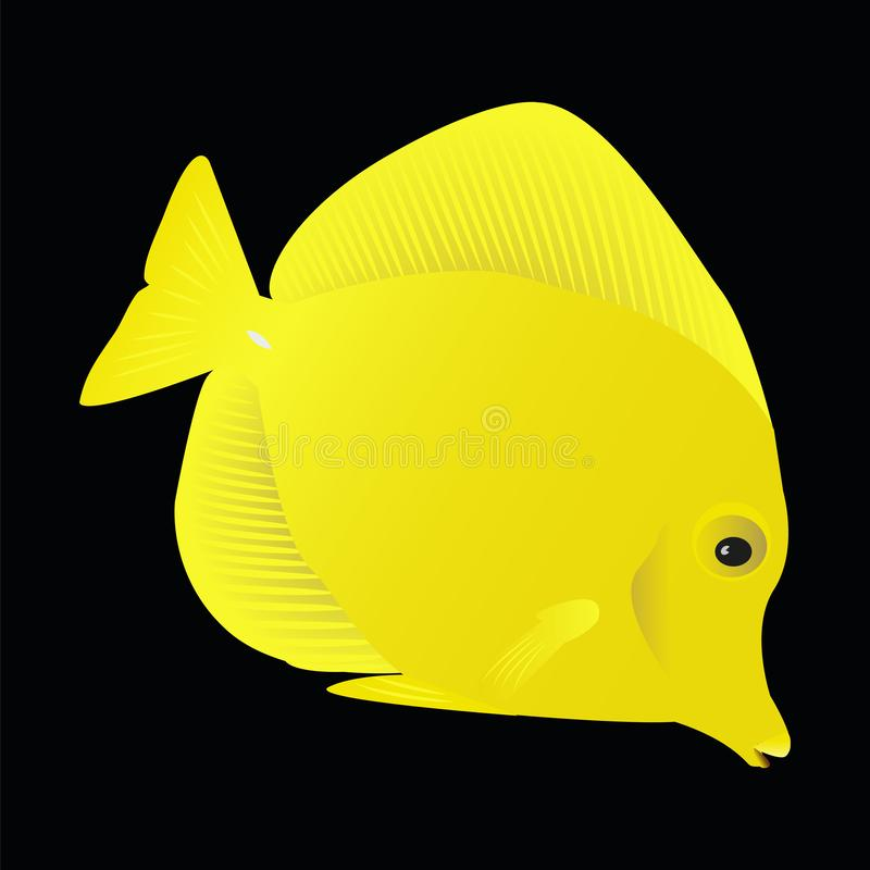 FiskZebrasoma flavescens på svart bakgrund vektor illustrationer