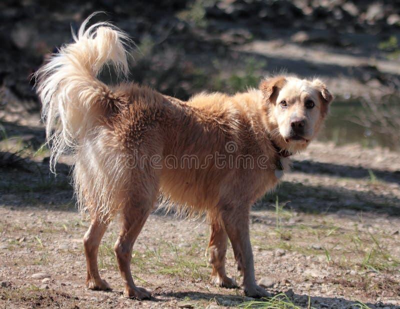 Fissare bagnato del cane fotografia stock