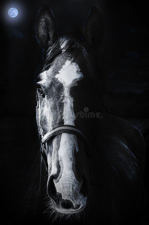 Download Fissare Del Cavallo Sinistro Fotografia Stock - Immagine di erba, bocca: 56883196