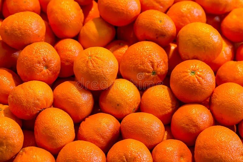 Fissi della frutta di un pezzo del mandarino arancio degli agrumi molta il web design luminoso del menu di base del modello del f immagine stock