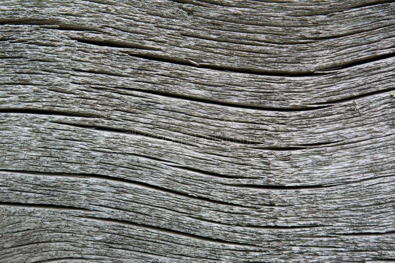 fissures en forme d'arc sur le site du vieux bois gris photos libres de droits