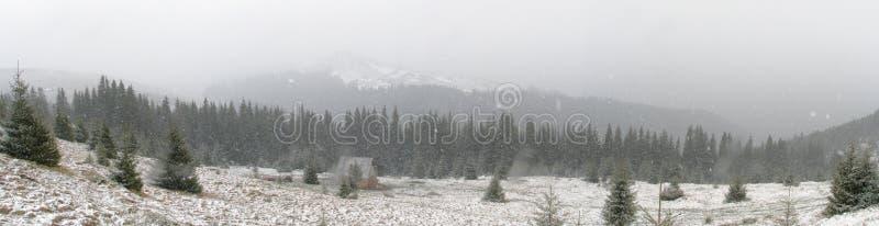 Download Fist snowfall stock photo. Image of landscape, coniferous - 3724324