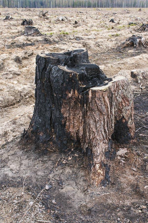 Fiszorek palący puszka starzy rżnięci drzewni koszty palący puszek po środku halizny na którym zrobi ciąć w dół drewno fotografia royalty free