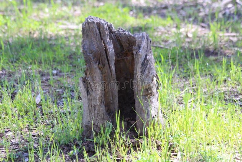 Fiszorek w lesie fotografia royalty free