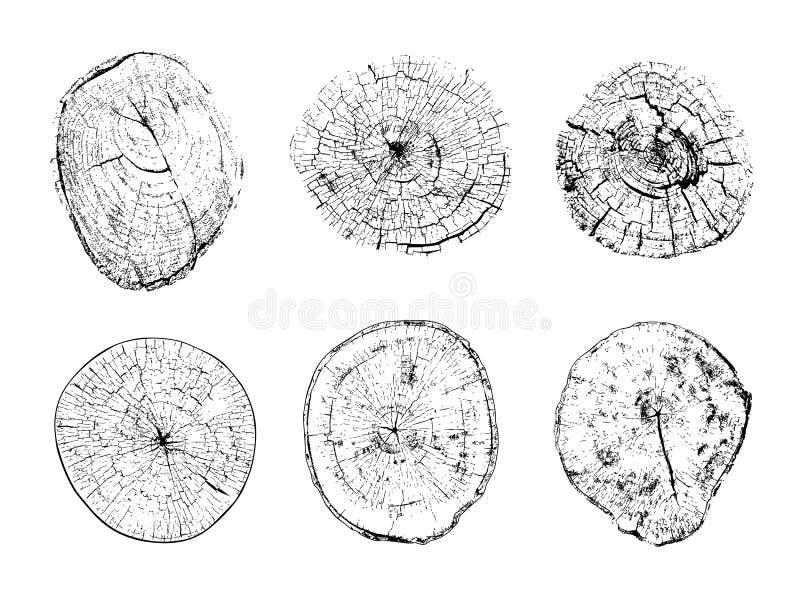 Fiszorków przekroje poprzeczni z rocznymi pierścionkami ilustracja wektor