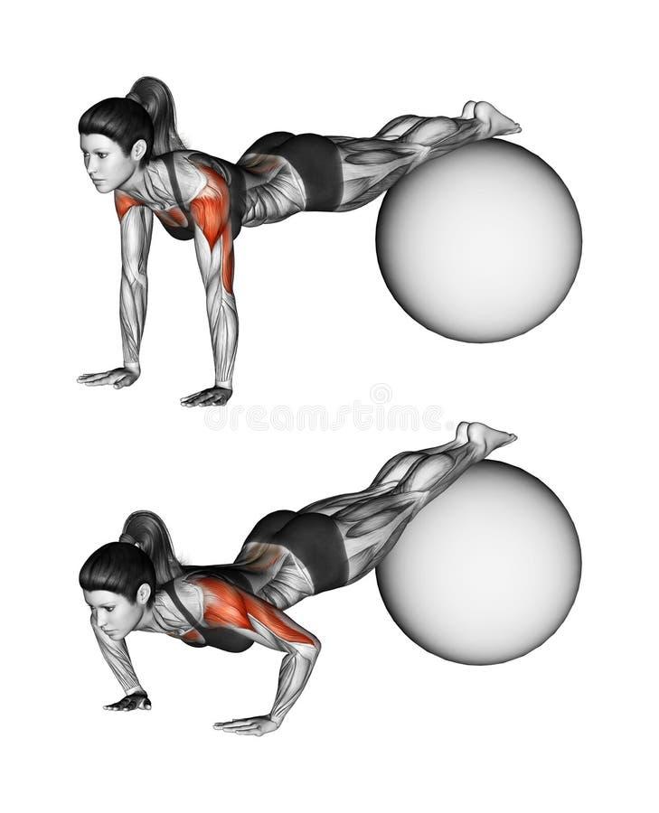 Fitball行使 与脚的俯卧撑在fitball 女性 向量例证