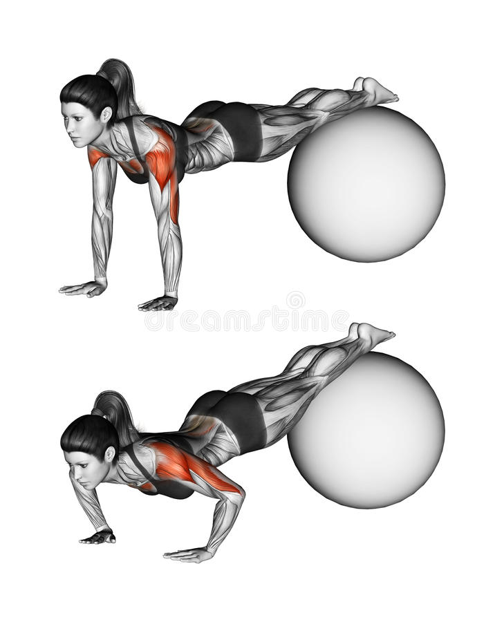 Fitball exercising. Push-ups with feet on fitball. Female. Push-ups with feet on fitball. Exercising for Fitness. Target muscles are marked in red. Initial and vector illustration