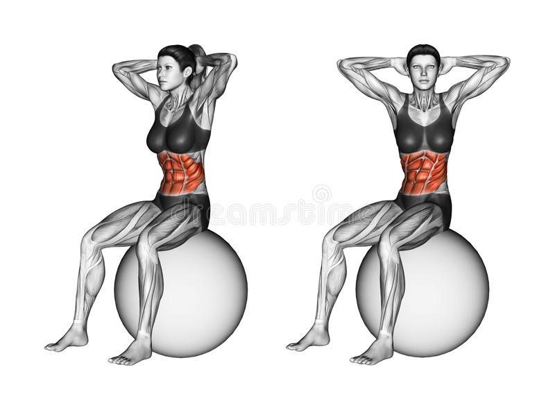 Fitball exercising. Turns torso sitting on fitball. Female. Turns torso sitting on fitball. Exercising for Fitness. Target muscles are marked in red. Initial and royalty free illustration