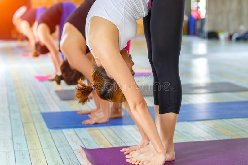 Fitness asian female group doing warm up yoga pose in row at the yoga class. Selective focus royalty free stock image