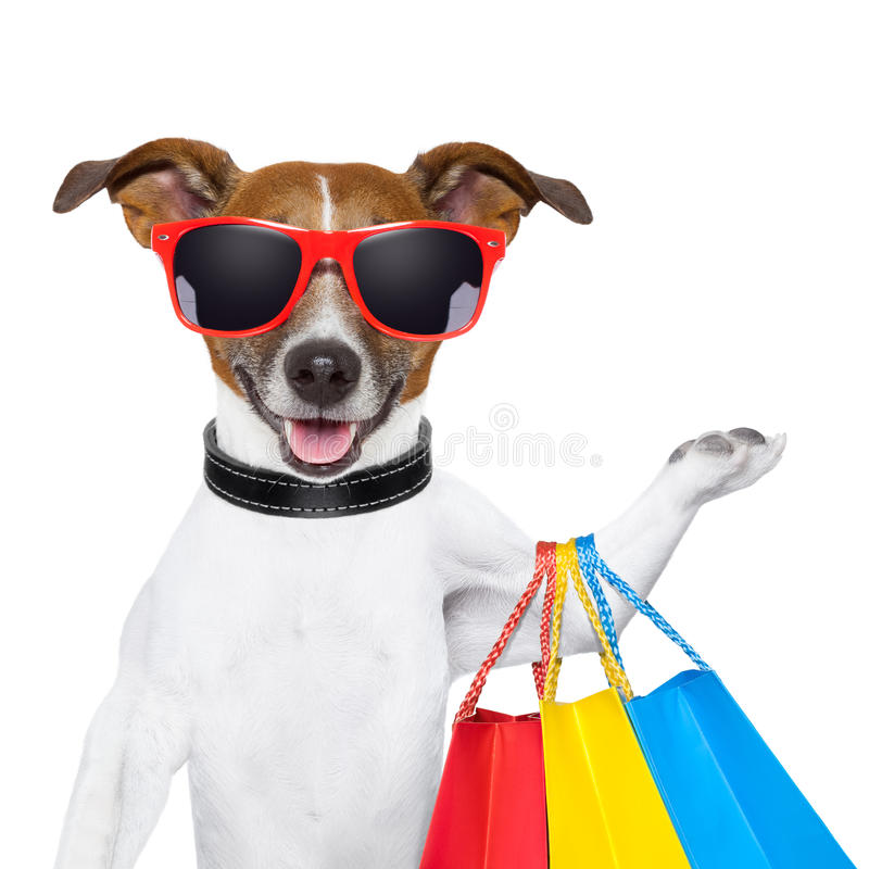 Fitness dog royalty free stock photography