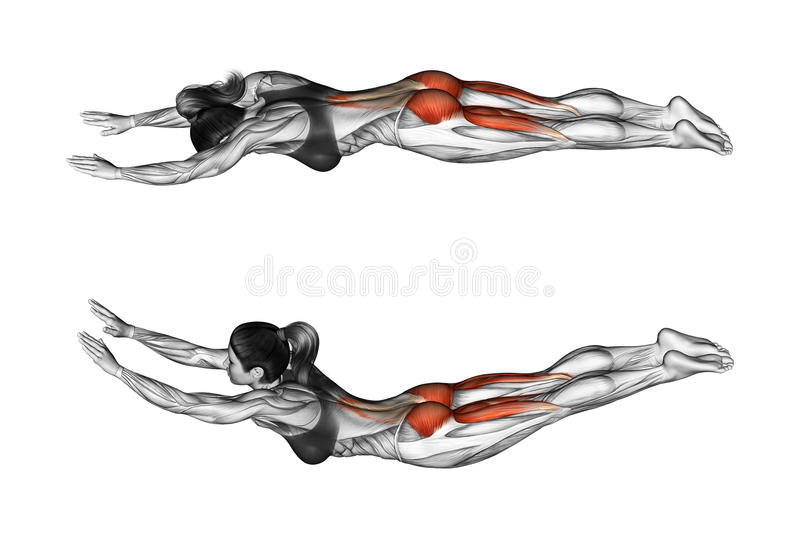 Fitness exercising. Exercise like superman. Female. Exercise like superman. Exercising for Fitness. Target muscles are marked in red. Initial and final steps stock illustration
