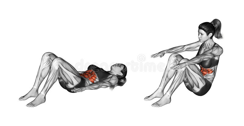 Fitness exercising. Lifting the body from a prone position. Female. Lifting the body from a prone position. Exercising for Fitness. Target muscles are marked in stock illustration