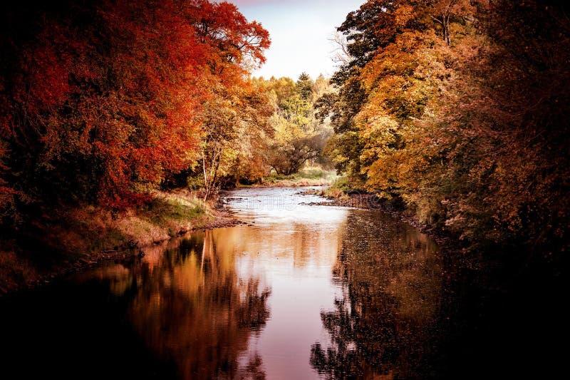 Fiume-autunno-albero-bel-fiume immagine stock libera da diritti