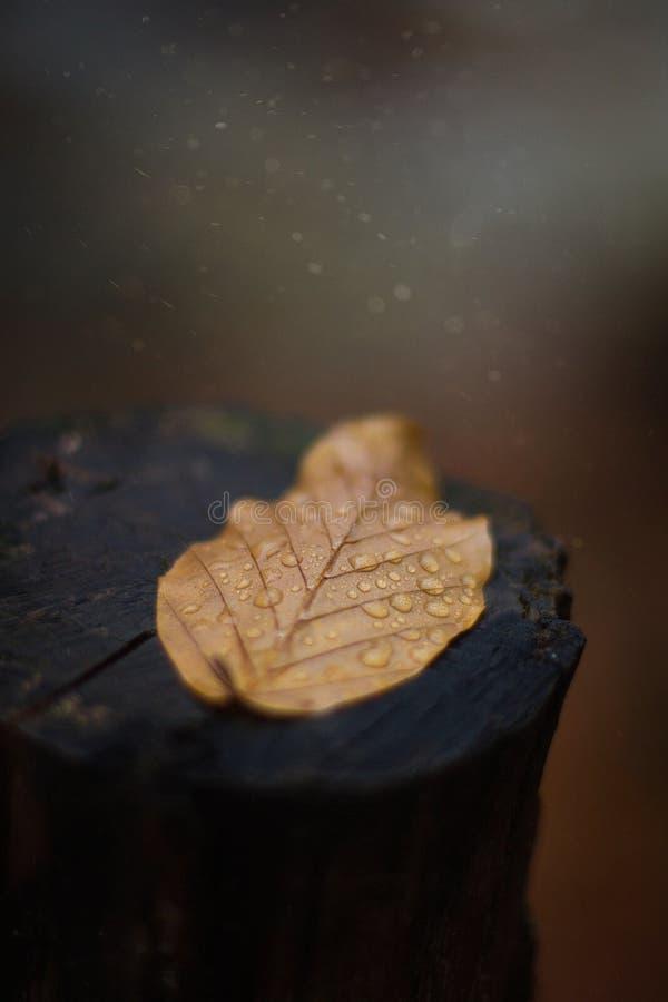 Fiume, autunno, foglia gialla, legno fotografie stock libere da diritti