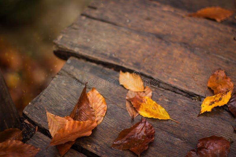 Fiume, autunno, foglia gialla, legno immagini stock