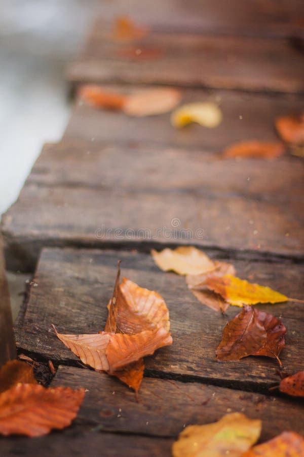 Fiume, autunno, foglia gialla, legno fotografia stock