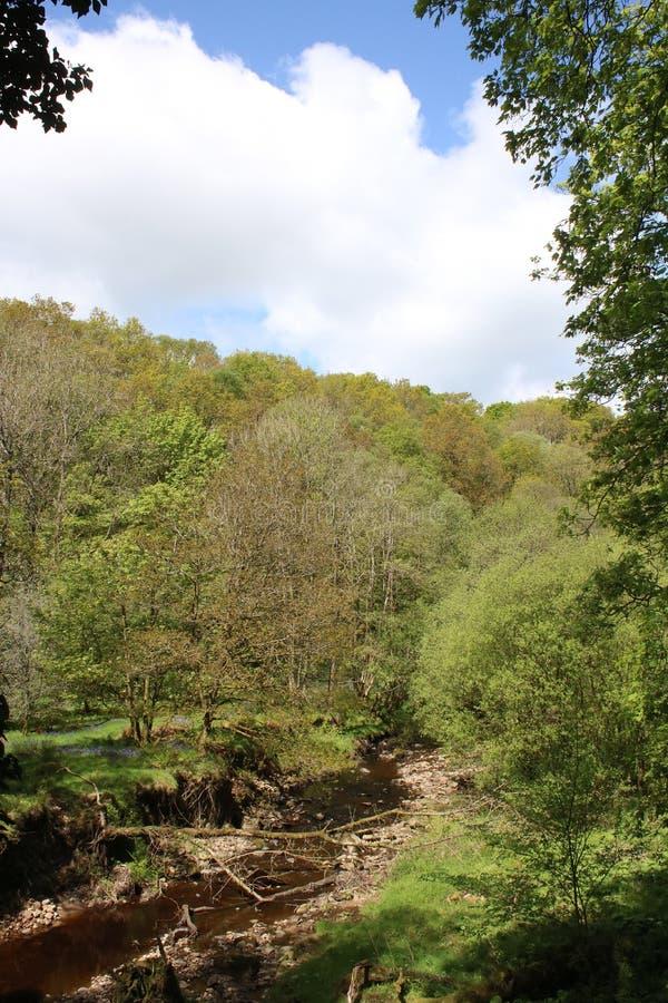 Fiume Calder in terreno boscoso, Calder Vale, Lancashire fotografie stock libere da diritti