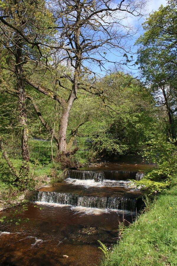 Fiume Calder, Calder Vale, Lancashire delle cascate fotografie stock libere da diritti