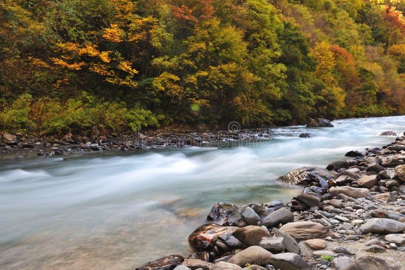 Fiume con gli alberi in autunno fotografie stock
