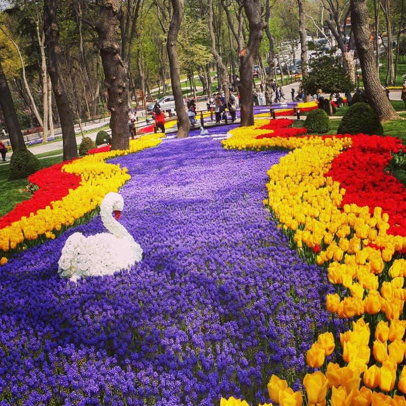 Fiume dei tulipani immagini stock