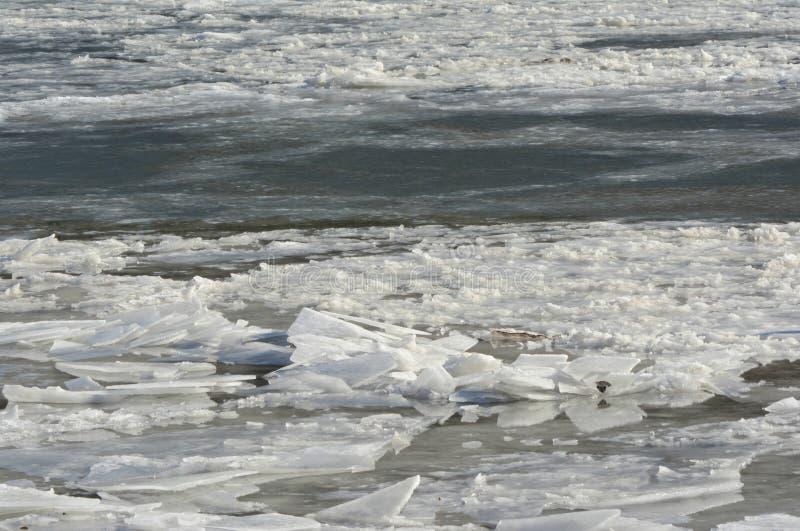 Fiume del Minnesota: Esposizione di galleggiamento della banchisa immagine stock