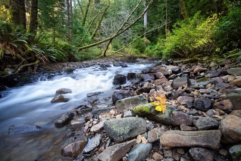 Fiume dell'Oregon fotografia stock libera da diritti