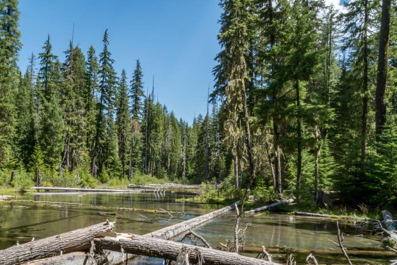 Fiume dell'Oregon immagini stock libere da diritti