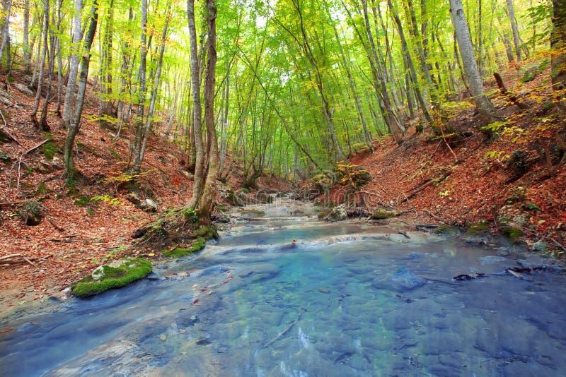 Fiume della foresta fotografia stock libera da diritti