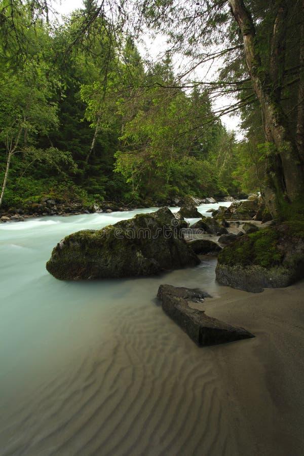 Fiume della foresta con acqua calma immagini stock